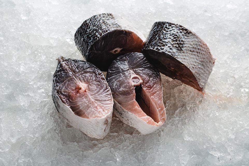 barracuda-steak-cut-1