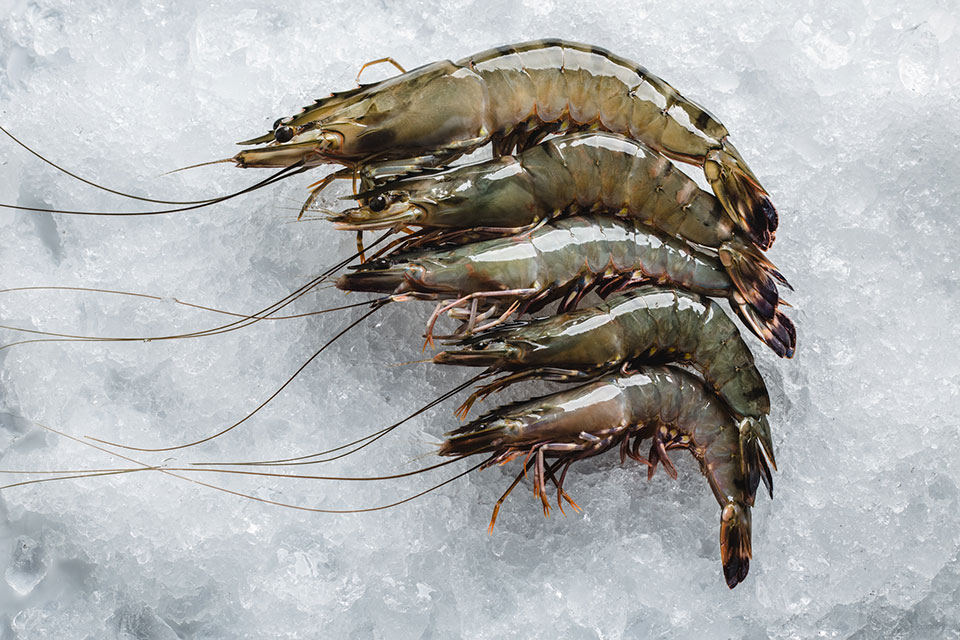 black-tiger-prawn-2