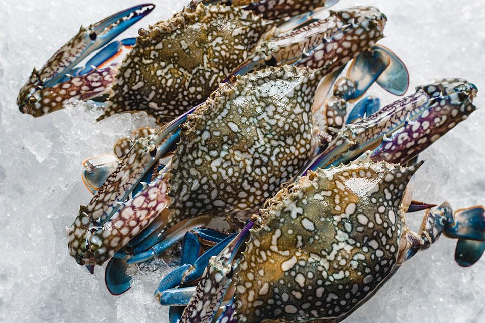 blue-swimming-crab