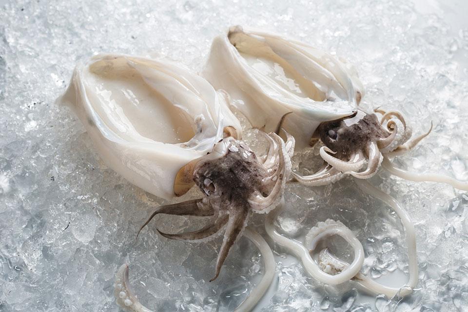 cuttlefish peeled