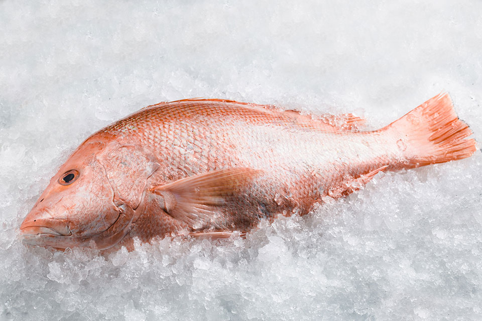 red-snapper-1