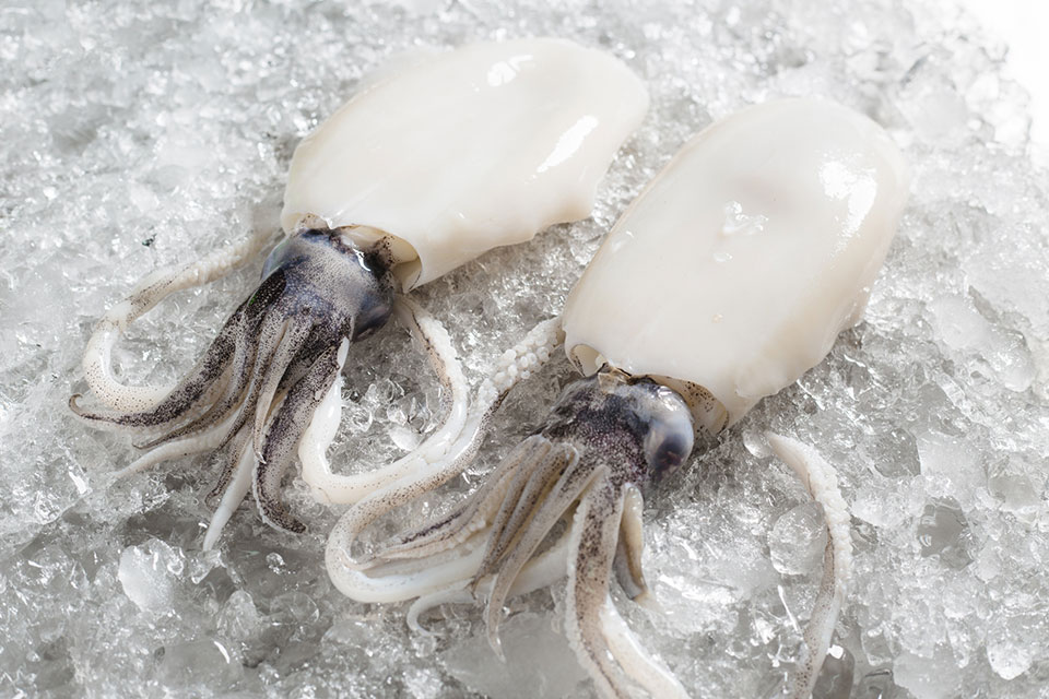soft cuttlefish peeled