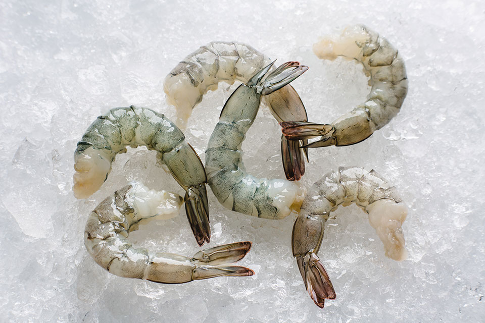 white-shrimp-farmed-2