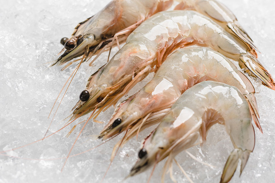 white-shrimp-wild-1