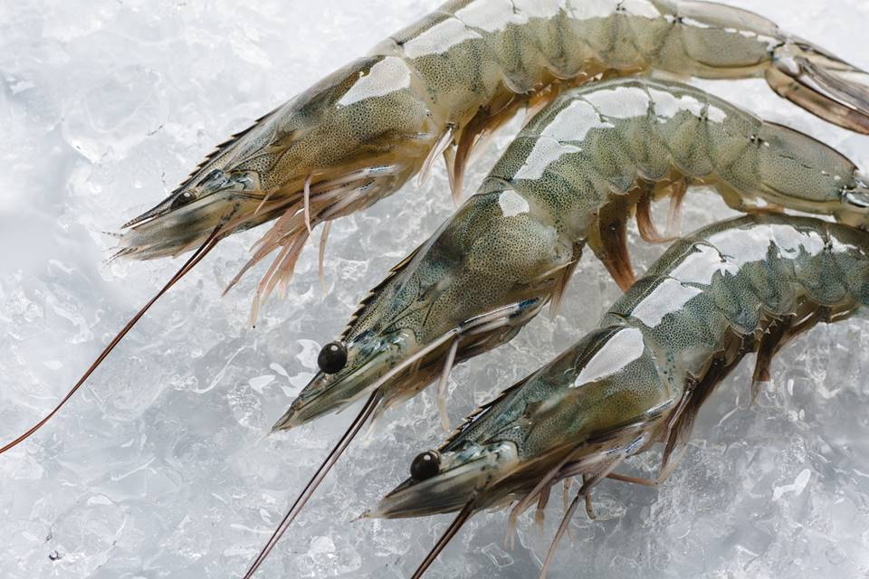 WHITE-SHRIMP-FARMED-2-1